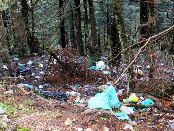 Bosque de plástico